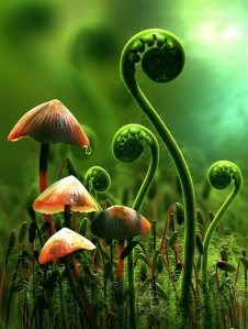 Metapholiage
