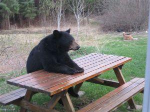 Bear at a picnic table.