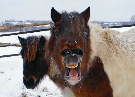 A goddamned pony.