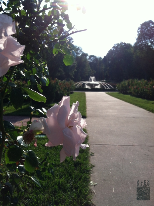Laura Conyers Smith Municipal Rose Garden