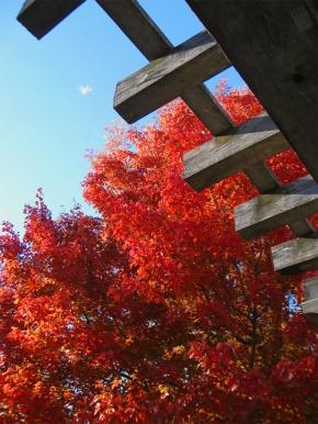 Autumn in Brookside