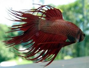 Fish Obituary