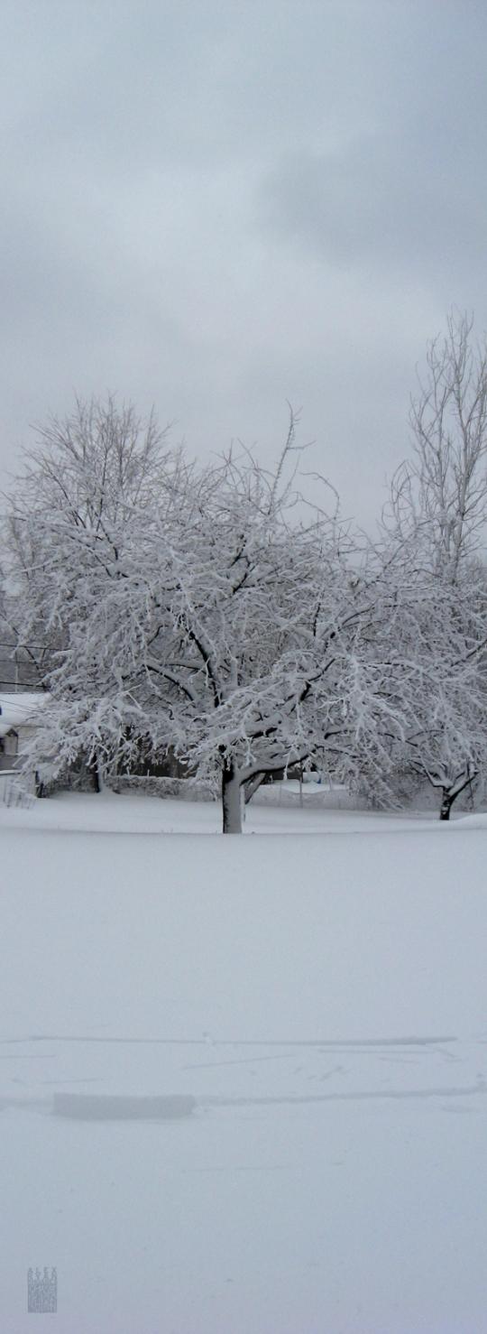 snowmageddon01