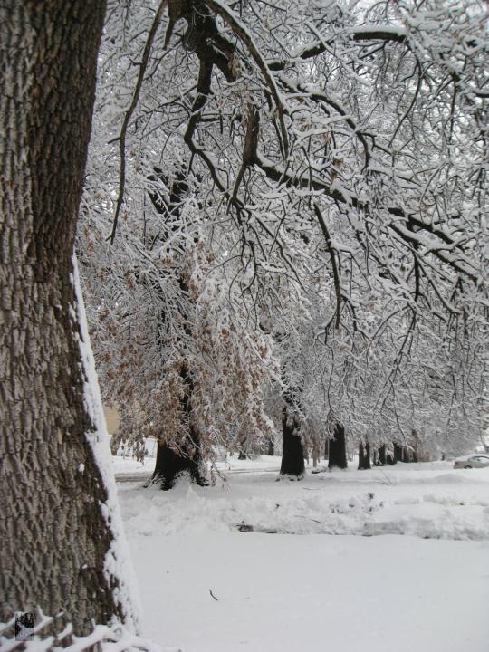 snowmageddon03