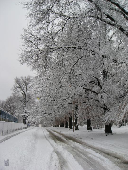 snowmageddon04